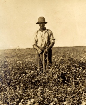 Field worker in the red clover TC's place